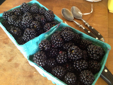 blackberries08_17