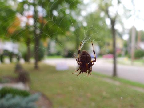 spiderFall09_29