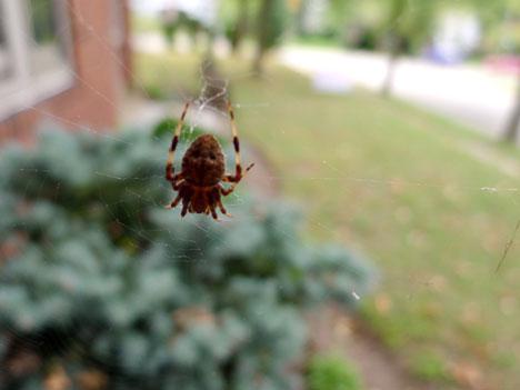 spiderFallA09_29