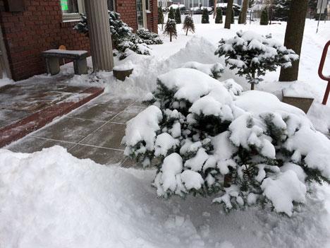 snowPines02_20