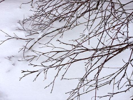 snowTree02_20