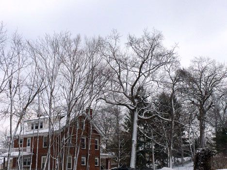 snowTrees02_20