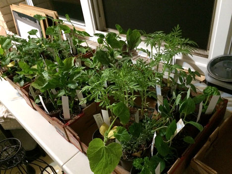 vegetablePlants05_21