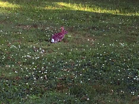 bunnyFar06_15