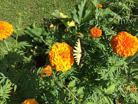 butterfly07_28