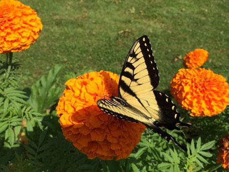 butterflyB07_28