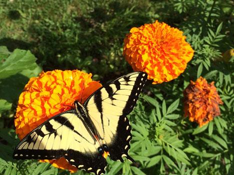 butterflyC07_28