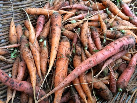 carrotsTrimmed08_05