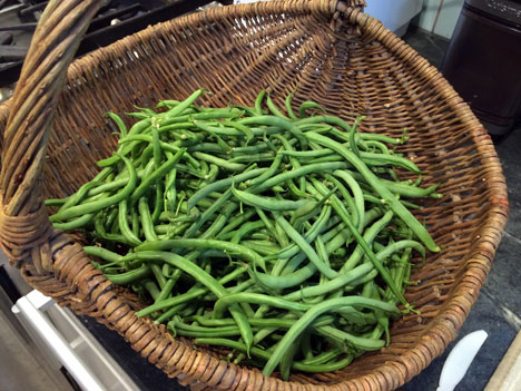 greenBeansSunday08_05