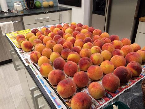 peaches08_18