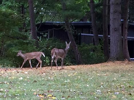 deer10_09