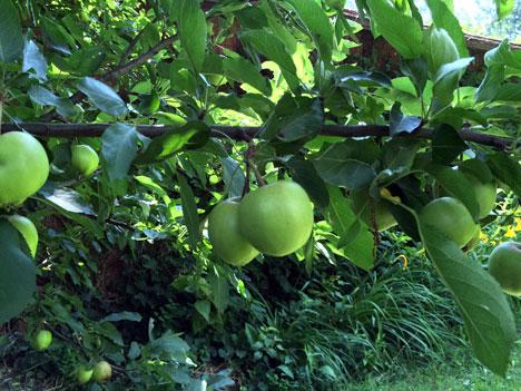 apples07_10