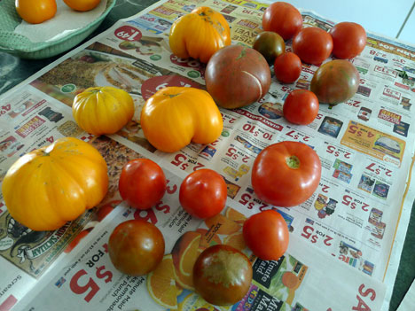 tomatoes09_18