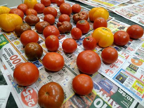 tomatoes09_28