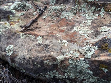 lichenC02_28