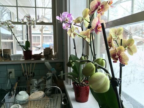 orchidGarden02_12