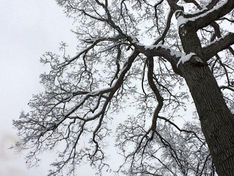 snowDayB02_28