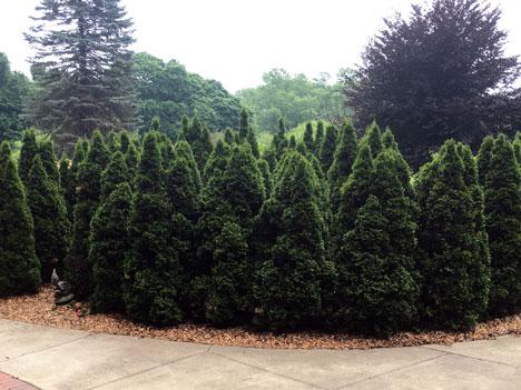 trees06_17