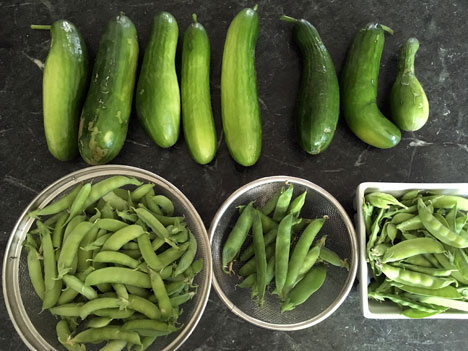 peasCucumbers07_20