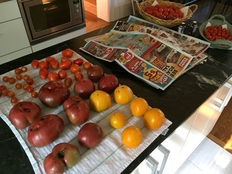 tomatoes08_12