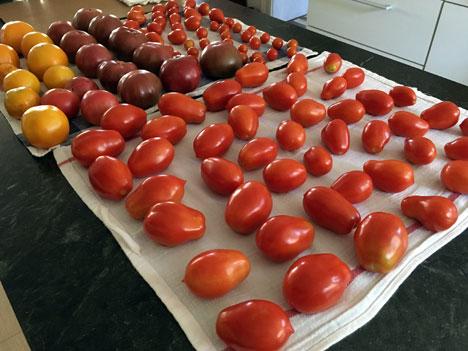 tomatoes08_30