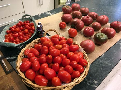 tomatoesA08_18