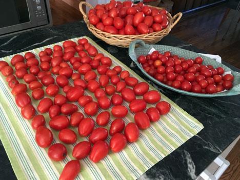 tomatoesWaiting08_23