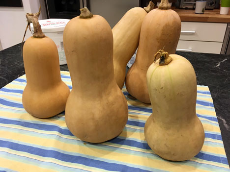 butternutSquash11_17