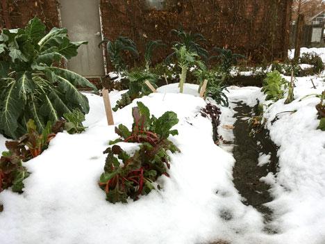garden12_15