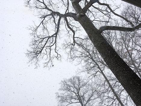 snowStorm12_15