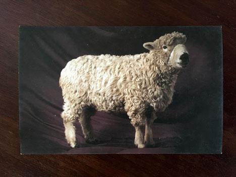 sheepcard01_01